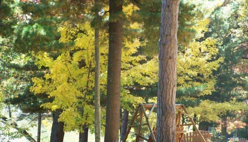 fall 10-15-12 212